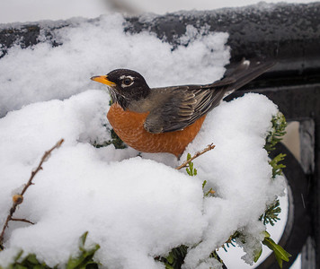 Little bird on a snowy nest