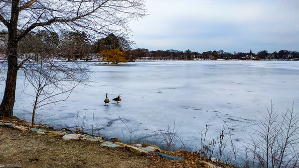 Jamaica Pond area!