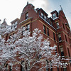 A winter day in Harvard University!