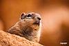 GroundSquirrel_IMG_1352