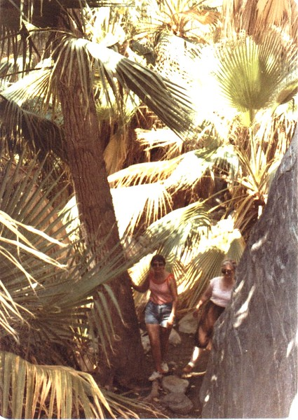 06 - Andreas Canyon