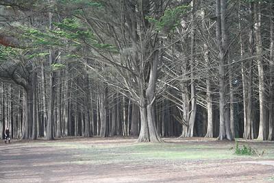 Forest & Farm