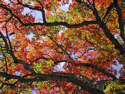 Autumn Color, Plumas County, California