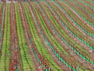 Eberly Vinyards, Paso robles, California