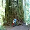 Boy Scout Tree | California Redwoods