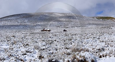 Bodie Ghost Town California Old Building Silver Gold Shore Fine Art Giclee Printing Fine Art Spring - 010511 - 05-10-2011 - 7565x4099 Pixel
