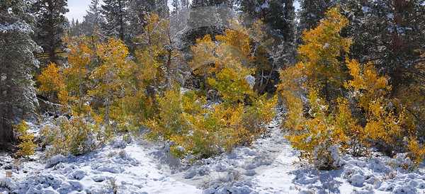 Bridgeport Virginia Lakes Snow Autumn Fall Color Tree Stock Pictures View Point Winter Photography - 010533 - 05-10-2011 - 9140x4175 Pixel