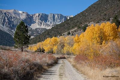 Dana Plateau overlooking Tioga Canyon