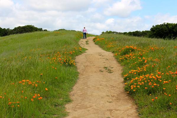 Helen Putnam Regional Park near Petaluma, California