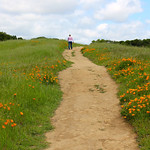 Hiking Among the Wildflowers – California in Spring Time  – Photo Essay