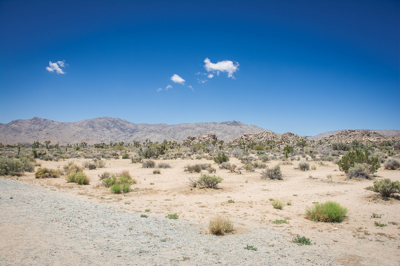 joshua tree national park hikes