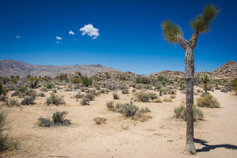 where to hike in joshua tree