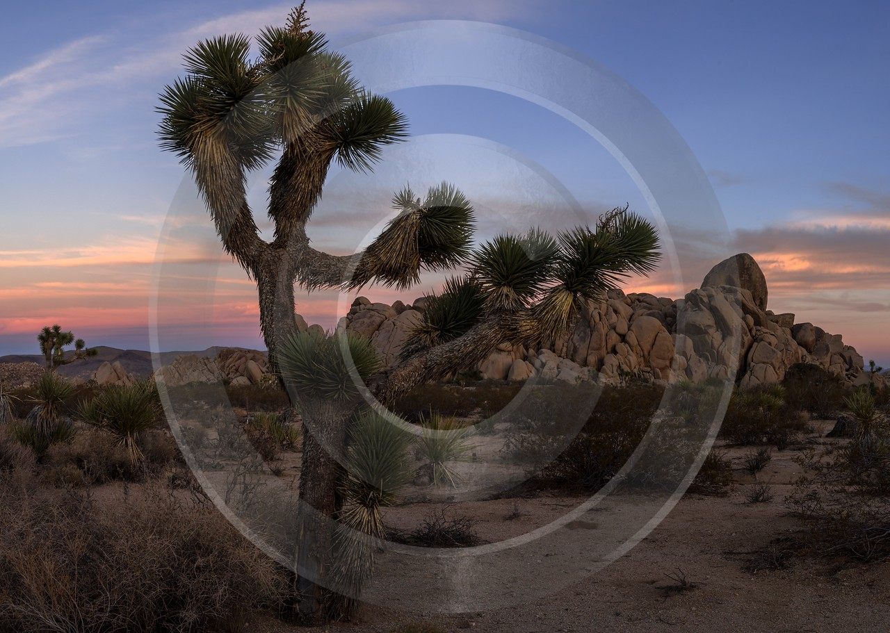 Joshua Tree National Park California Sunset Evening Glow Fine Art Photography - 014220 - 21-10-2014 - 9335x6641 Pixel