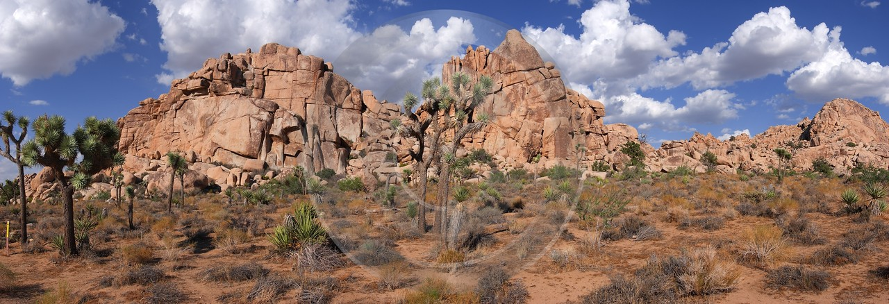 Joshua Tree National Park Twentynine Palms Desert Flower Fine Arts Art Prints - 011159 - 01-10-2011 - 12170x4161 Pixel