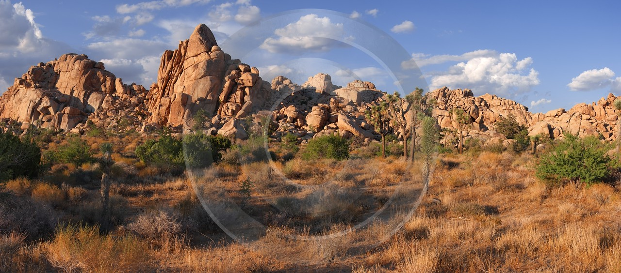 Joshua Tree National Park Twentynine Palms Desert Flower Pass Photography Landscape Photography - 011188 - 01-10-2011 - 9310x4103 Pixel