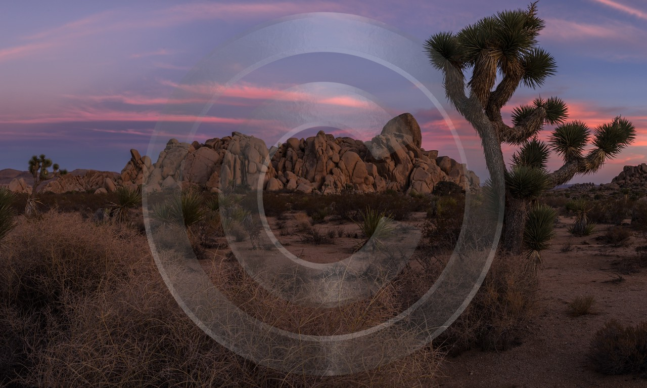 Joshua Tree National Park California Sunset Evening Glow Fine Art Landscape Photography Stock Image - 014218 - 21-10-2014 - 11304x6775 Pixel