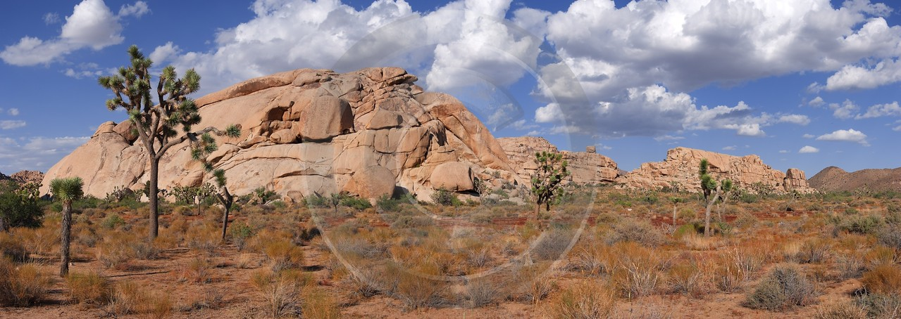 Joshua Tree National Park Twentynine Palms Desert Flower Creek Hi Resolution Barn Prints For Sale - 011166 - 01-10-2011 - 11809x4191 Pixel