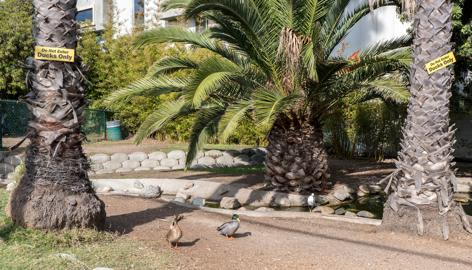 Venice Canals Duck Park - What to do in Los Angeles in one day