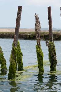 Algae wraps