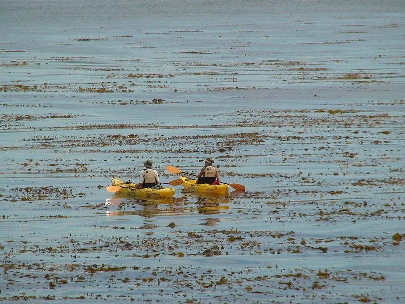 Sea Kayakers