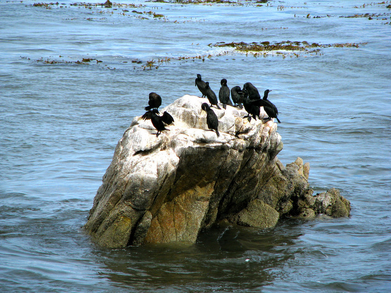 Egrets?