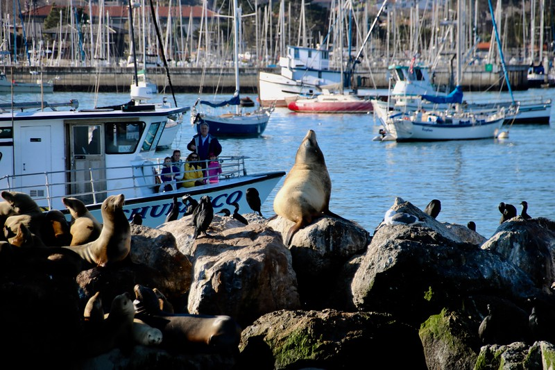 Sea Lions by Coast Guard Pier - Monterey, California