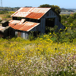 Old Barn – Elkhorn Slough National Estuarine Research Reserve – Photo