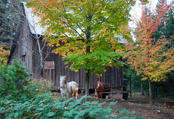 Nevada City horse barn