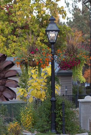 Nevada City, fall colors