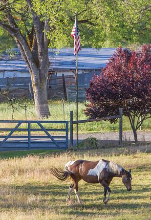 Equestrian property, Magnolia Rd.