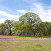 Table Mountain Oak grassland