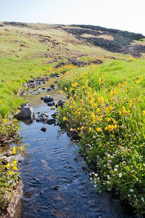 Ephemeral streams of Table Mountain