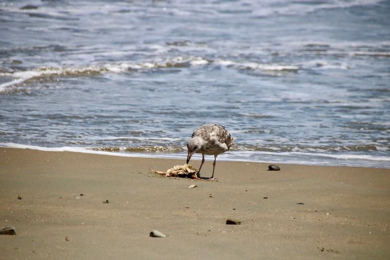 Sea bird - Point Reyes National Seashore