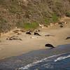 Elephant Seals - Chimney Rock