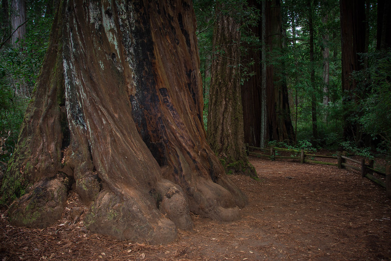 redwood state park california