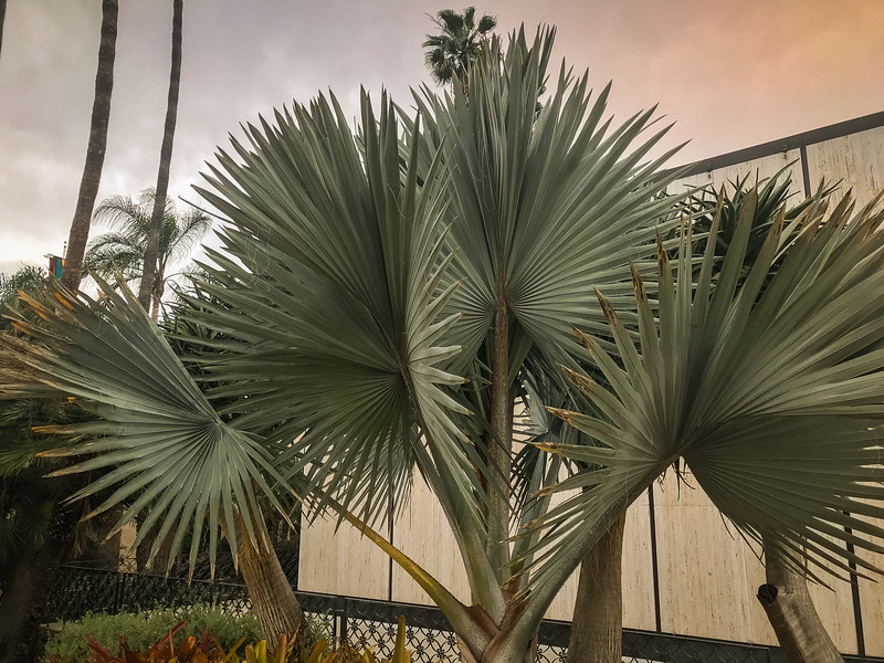 balboa park nature