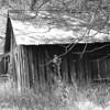 Surprise Valley cabin