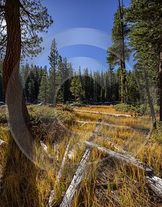Snow Creek Lake Tioga Pass Yosemite National Park Flower Outlook Coast - 014278 - 20-10-2014 - 7188x9194 Pixel