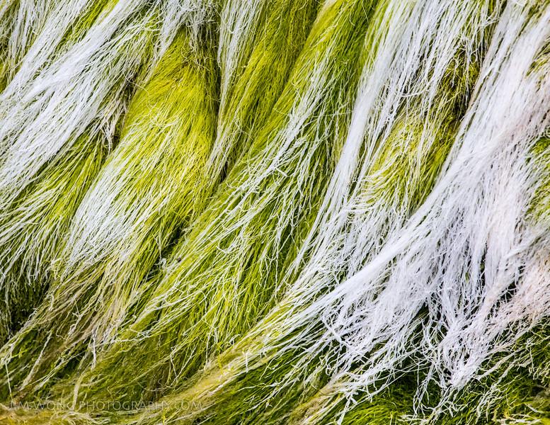 Sea grass, San Gregorio, California