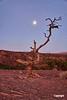 MoonSetPanoramaPoint_DSC1744