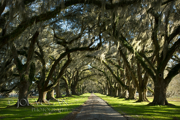 Avenue of Oaks, Tomotly Plantation, Beaufort County, South Carolina