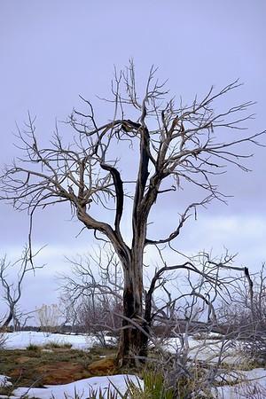 Mesa Verde winter