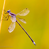 Dragonfly, Denver Botanic Gardens