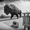 Buffalo Statue, Jamestown, North Dakota