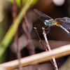 Dragonfly II, Everglades