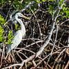John Pennekamp Coral Reef State Park, Florida