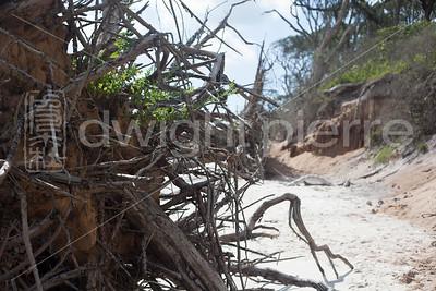dwight pierre Amelia & Talbot Island 2016 Florida IMG_2563