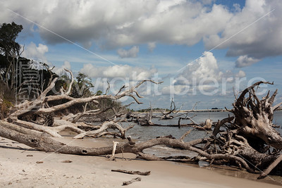 dwight pierre Amelia & Talbot Island 2016 Florida IMG_2517