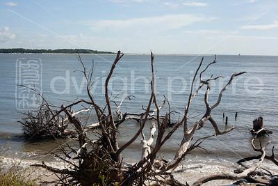 dwight pierre Amelia & Talbot Island 2016 Florida IMG_2442