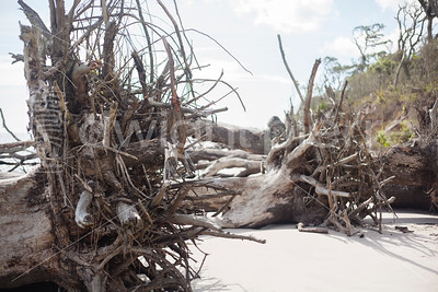 dwight pierre Amelia & Talbot Island 2016 Florida IMG_2530